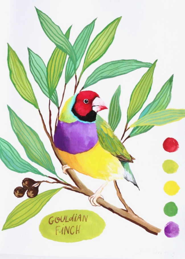 Gouldian finch paining by Deanna Maree