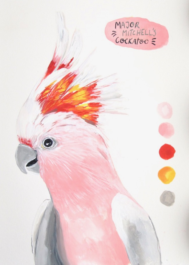 Major Mitchell's Cockatoo gouache illustration by Deanna Maree