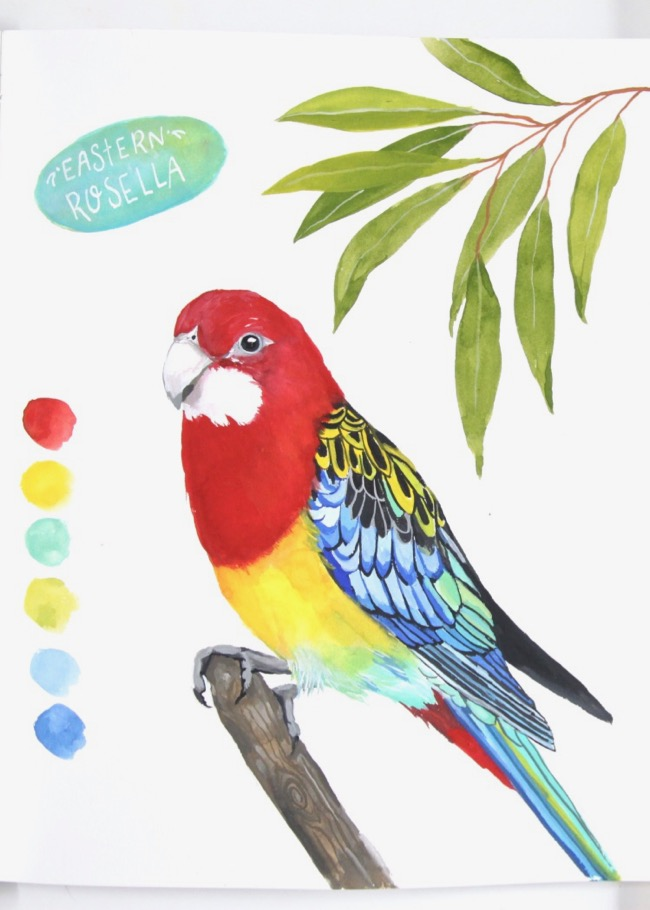 Eastern rosella painting, colourful bird illustration by Deanna Maree