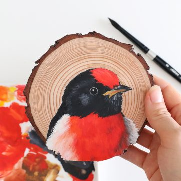 12) Red-capped Robin