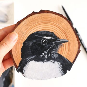 16.Willie Wagtail