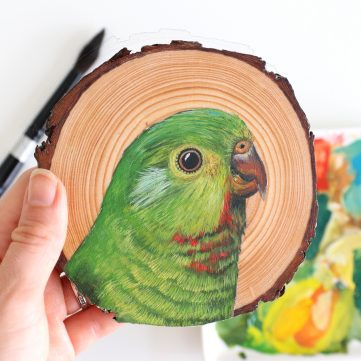 19) King Parrot (Female)