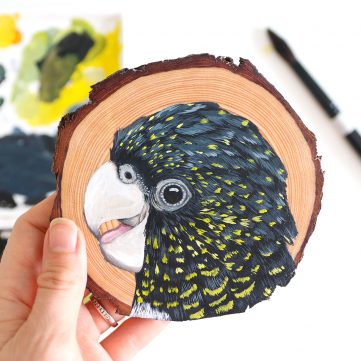 32) Red-tailed Black Cockatoo