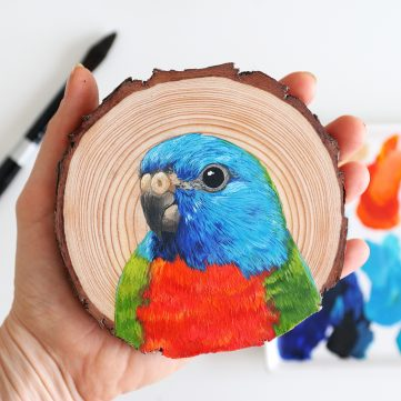 34) Scarlet-chested Parrot