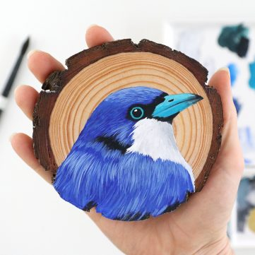 44) Blue Vanga