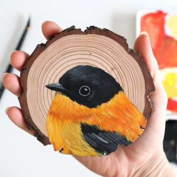 46) Black-and-orange Flycatcher