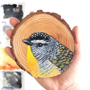 6) Spotted Pardalote