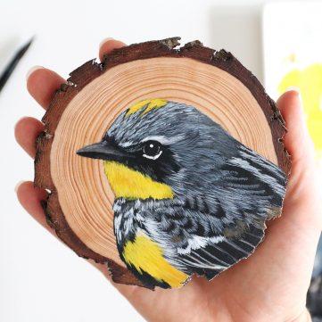 66) Yellow-rumped Warbler