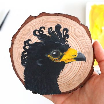 76) Bare-faced Curassow